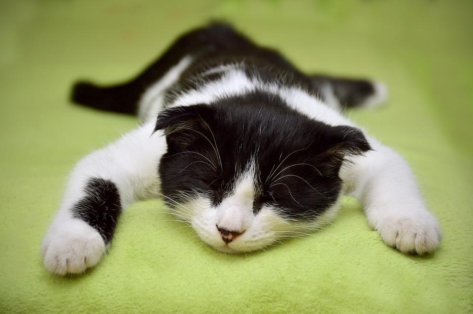 cat-2605502_960_720